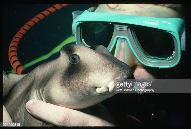 The curator of a marine park wears scuba gear as he examines a Port Jackson shark Australia | Location Ocean World Sydney Australia