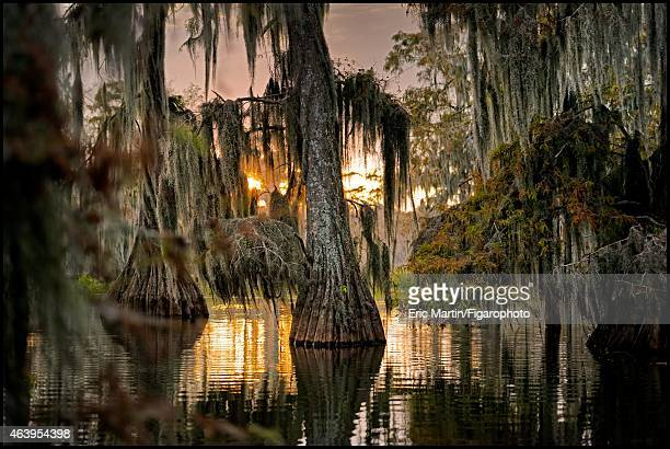 The cypress of Lake Martin are photographed for Le Figaro Magazine on October 31 2013 in Breaux Bridge Louisiana CREDIT MUST READ Eric...