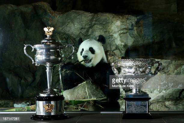 The Daphne Akhurst Memorial Cup and the Norman Brookes Challenge Cup stand in front of the panda enclosure of Funi during the Australian Open Trophy...