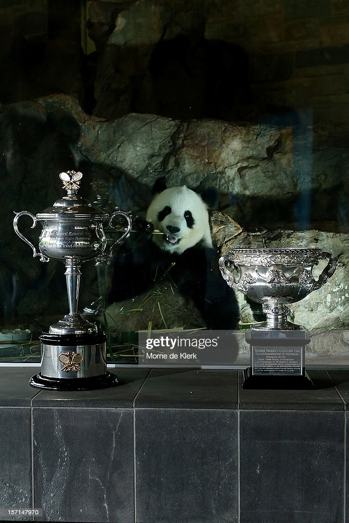 The Daphne Akhurst Memorial Cup (women's singles trophy) and the Norman Brookes Challenge Cup (mens singles trophy) stand in front of the panda enclosure of Funi, during the Australian Open Trophy Tour at Adelaide Zoo on November 29, 2012 in Adelaide, Australia.