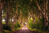 Road through the Dark Hedges tree tunnel at sunset in Ballymoney, Northern Ireland, United Kingdom