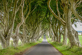 Romantic, atmospheric, tunnel-like avenue of intertwined beech trees, planted in the 18th-century.