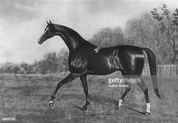 The Darley Arabian one of three horses from whom all modern thoroughbred racehorses are descended circa 1720 From the painting by J N Sartorius