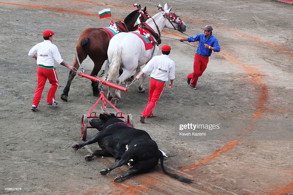 The dead bull is pulled away by horses after the bullfight in the annual fair on January 11, 2013 in Manizales, Colombia. The festival, is hosted in the city of Manizales in Colombia's central coffee region. Starting out as a trade fair, it has grown over the years to become one of Colombia's most important annual events.
