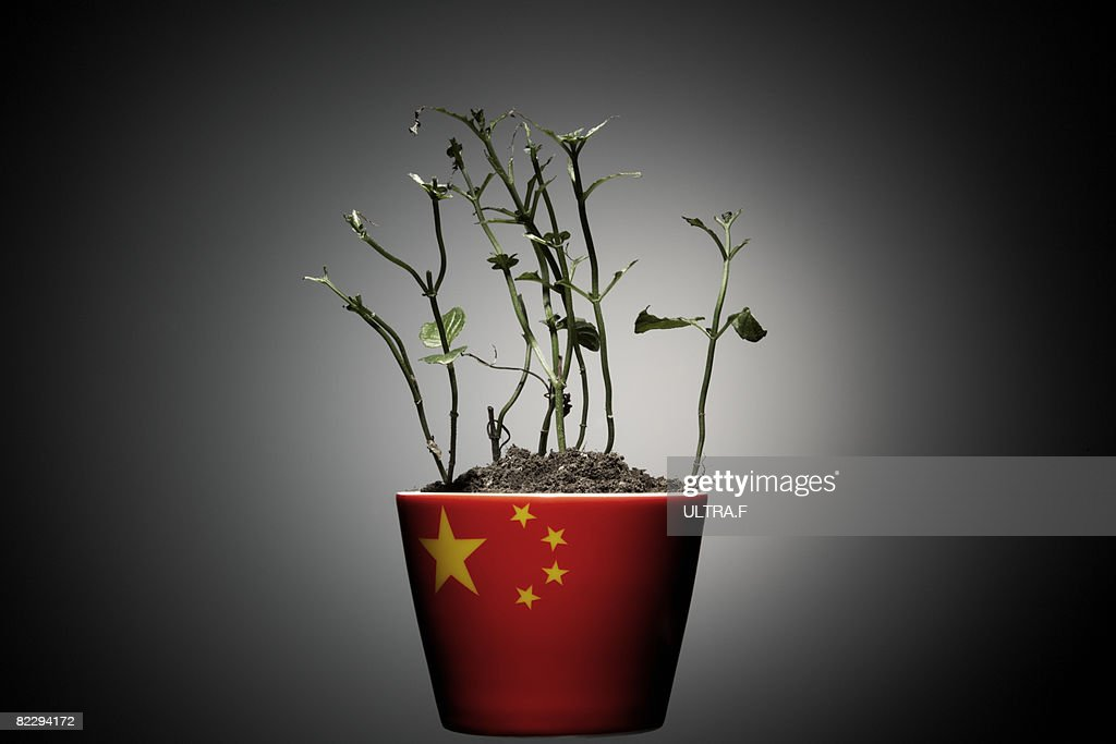 The dead leaves plants  : Stock Photo
