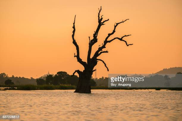 The dead tree near U Bein bridge at dawn, Myanmar.