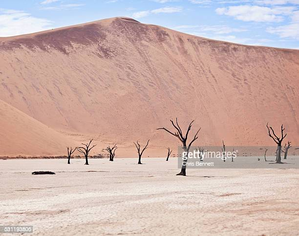 The dead trees of the Deadvlei, a salt pan in Namibia, sit beneath a towering sand dune.