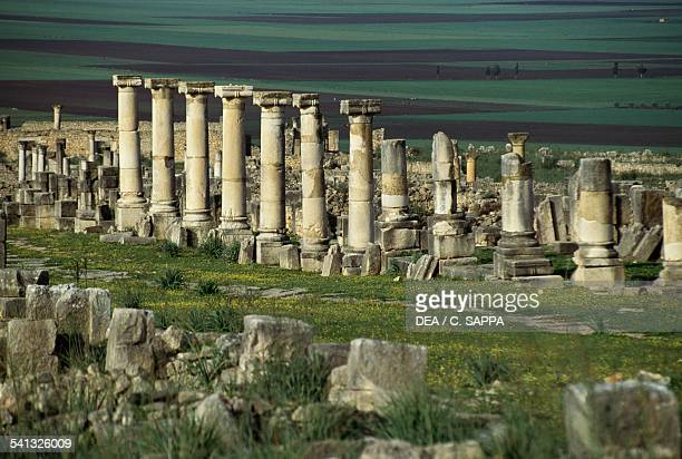 The Decumanum Maximus and the Basilica in the Roman city of Volubilis Morocco Roman civilisation 2nd3rd century