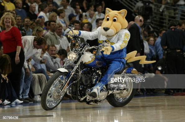 The Denver Nuggets mascot Rocky the Mountain Lion rides a motorcycle during an intermission in Game four of the Western Conference Quarterfinals...