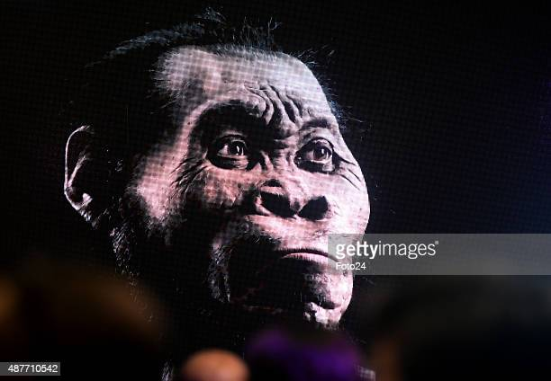 The discovery of a new species of human relative Homo Naledia was unveiled at The Cradle of Human Kind on September 10 2015 at Maropeng in...