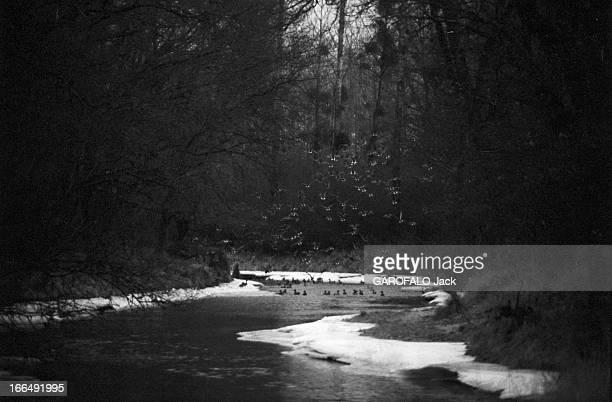 The Does Of The Chambord Park 1er février 1963 les biches du Parc du Château de Chambord face au manque de nourriture et au froid viennent manger le...