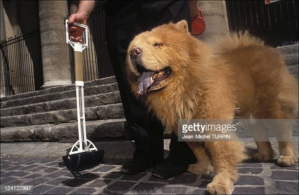 The dog pollution in Paris France in May 1992 Picking up