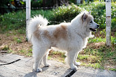 The dog standing and looking something,show detail and shape of younger dog,in a park,blurry light around