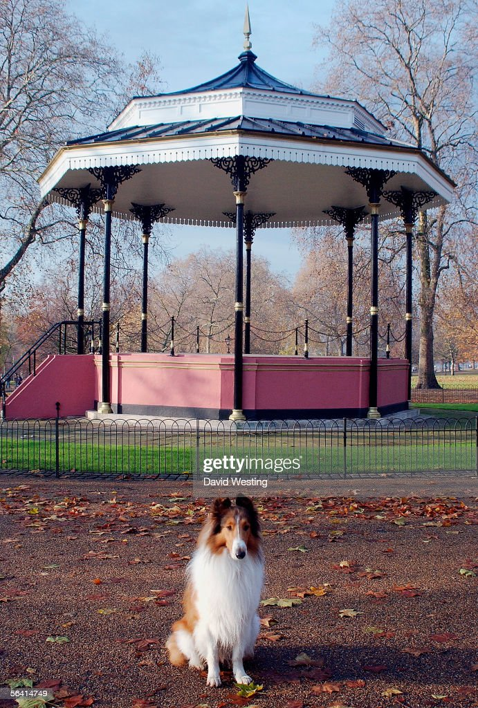 The Dog Who Plays Lassie Poses At A Photocall For New Film Based