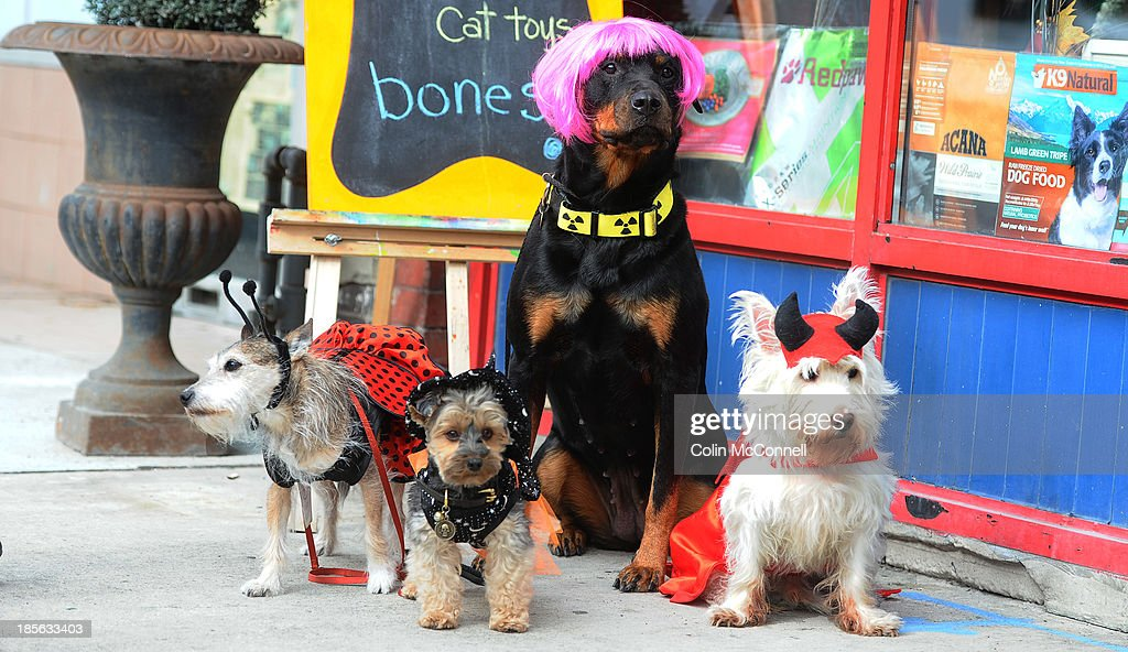 The dogs get dressed up for Halloween at The Small Wonders pet store on Danforth Avenue in Toronto as owner Keiley Abbat and her staff dress up their dogs for Halloween. October 22, 2013.