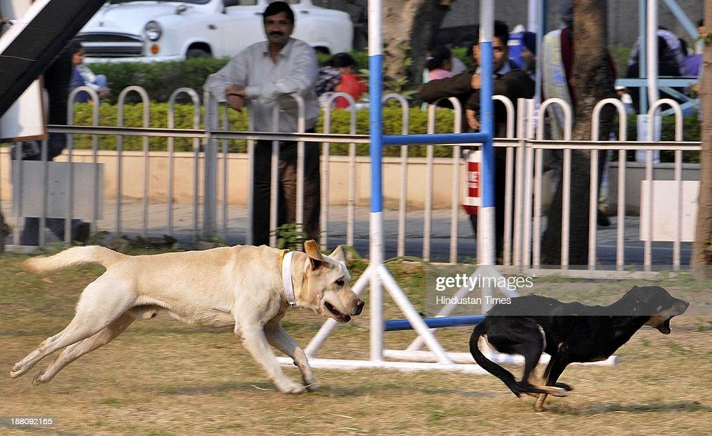 The dogs showing their skills as they were trained by the Army men at the Defense Pavilion at the India International Trade Fair at Pragati Maidan on November 15, 2013 in New Delhi, India. About 6,000 exhibitors including 250 from foreign countries are participating in the 33rd edition of IITF. While Japan is a partner country, South Africa will be the focus country.