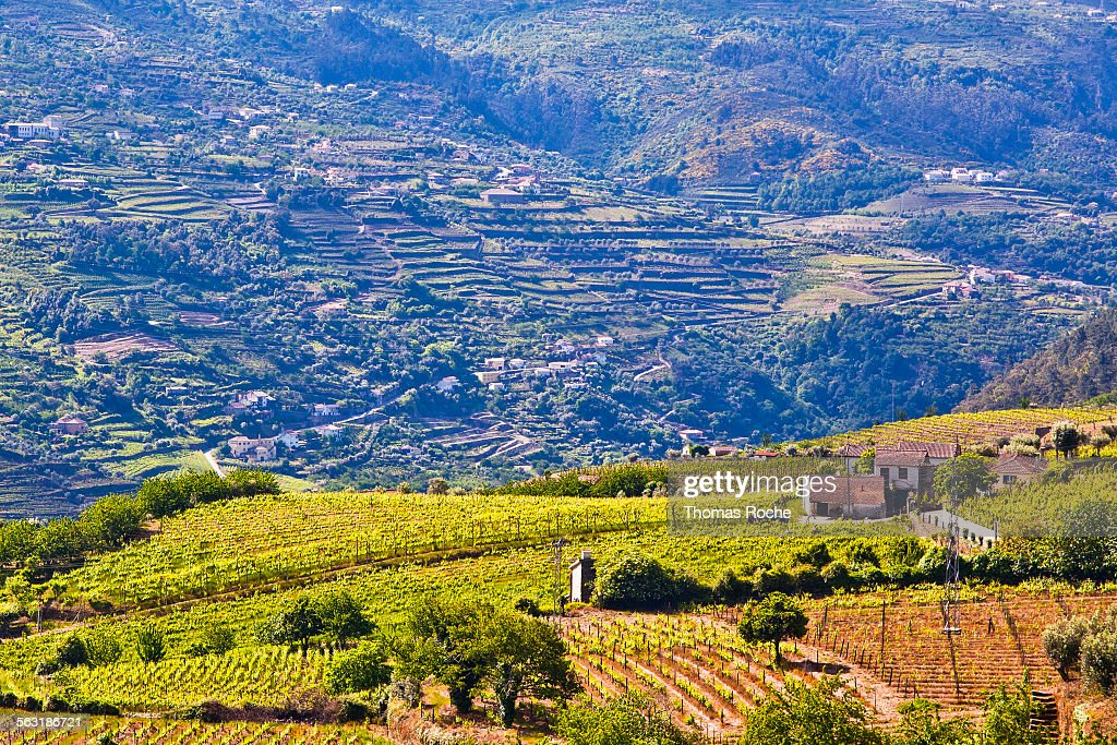 The Douro Valley in Portugal