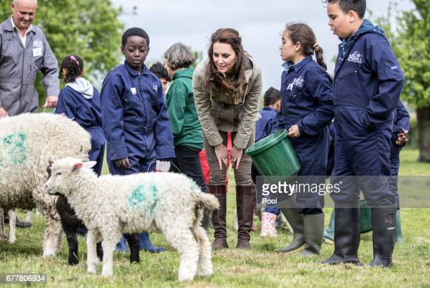 The Duchess of Cambridge with the sheep and lambs and children from Vauxhall primary school in London during a visit to a 'Farms for Children' farm...
