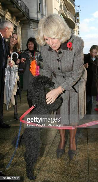 The Duchess of Cornwall laughs as 'Hero' the poodle jumps up during a charity celebration of the Nepalese 'Day of the Dog' in the garden of the Royal...