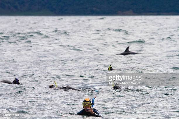 The Dusky dolphins found in Kaikoura are described as hyper-social. They are very playful and enjoy the company of swimmers in the water. The dolphins are very acrobatic and frequently jump out of the water
