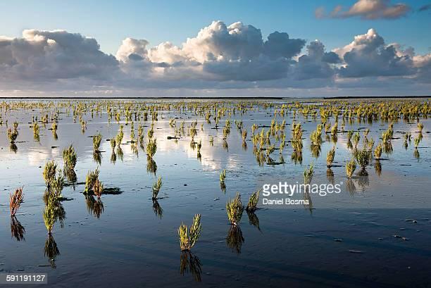 The Dutch Wetlands