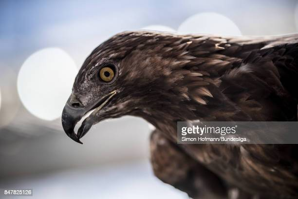 The eagle mascot of Frankfurt is seen during the Bundesliga match between Eintracht Frankfurt and FC Augsburg at CommerzbankArena on September 16...