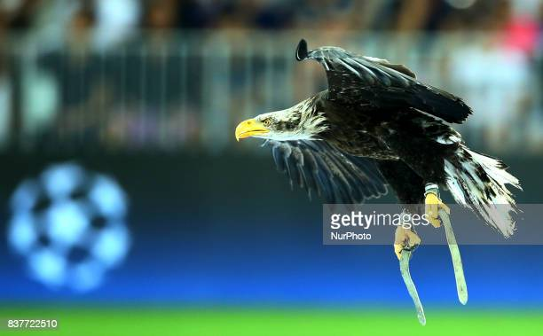 The eagle mascotte of Nice club during the UEFA Champions League Qualifying PlayOffs round second leg match between OGC Nice and SSC Napoli at...
