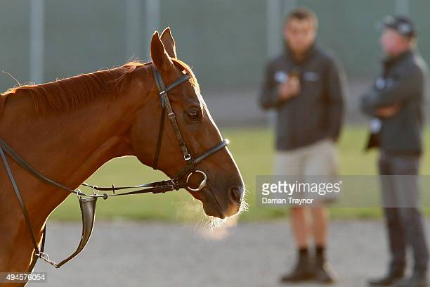 The Ed Dunlop trained Red Cadeaux warms up before a trackwork session at Werribee Racecourse on October 28 2015 in Melbourne Australia