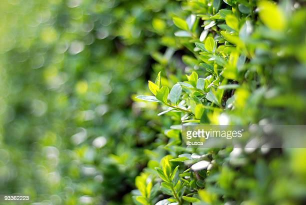 The edge of hedge