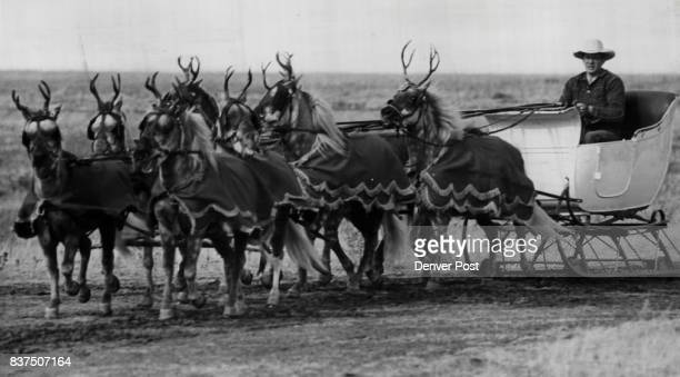 The Eight 'Reindeer' Are Ready To Pull Santa Claus' Sleigh In the Saturday Parade 'On Comet on Cupid on Donder and Blitzen' will be the cry heard in...