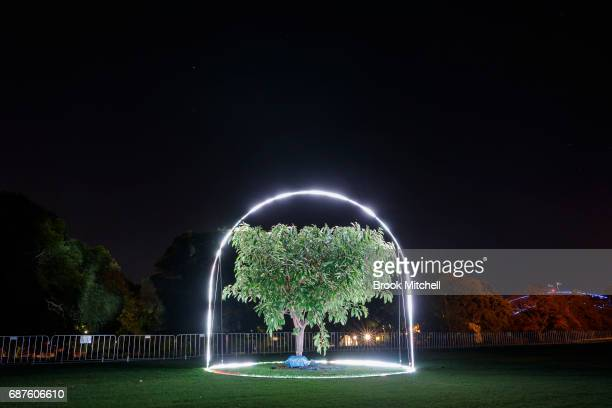 The Electric Forest installation ahead of Vivid Sydney at The Royal Botanic Gardens on May 24 2017 in Sydney Australia Vivid Sydney is an annual...