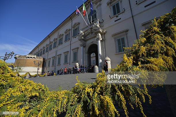The entrance of the Quirinale Palace the Italian Presidential palace is decorated with yellow mimosa on the occasion of the International Women's day...