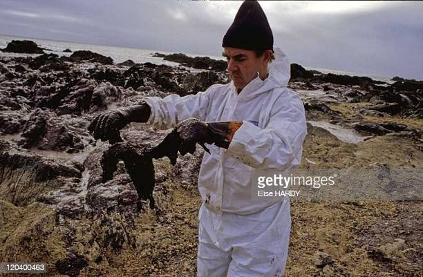 The Erika oil spill in Le Croisic Brittany France on January 02 2000