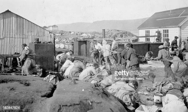 The Eskimos of Baffin Island manufacturing oil circa 1955