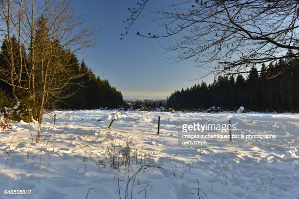 The evening light on snowy landscape