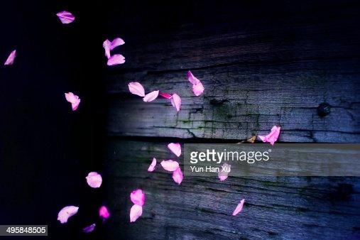 The Falling Sakura Petals