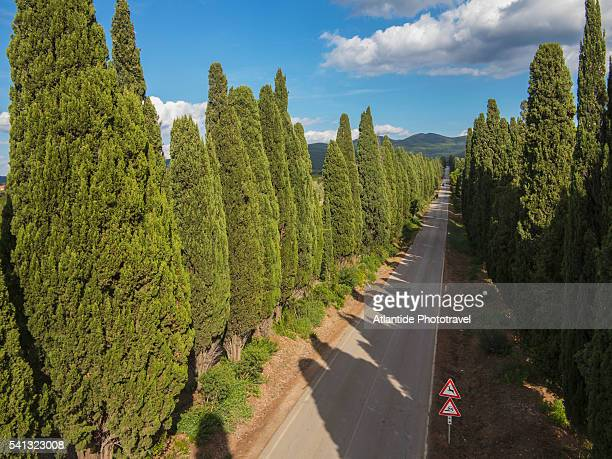 The famous Cypress Trees road going to Bolgheri