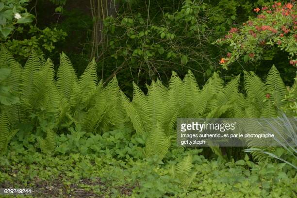 The ferns in middle wild vegetation