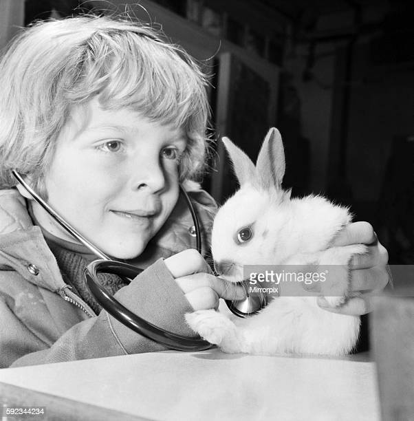 The few weeks old white rabbit at the Childrens' Zoo Crystal Palace London is just one of a litter born there and soon to be heading for new homes...