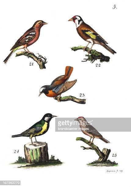 The Finch the European Goldfinch the Phoenicurus or Redstart the tit or chickadee and the Linnet Lithography From Die Vier Jahreszeiten in bildlicher...