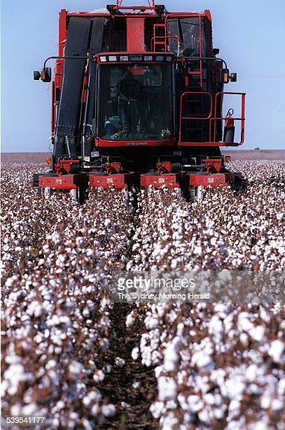 The first cotton picking of the year takes place in northern NSW 28 March 2000 SMH Picture by ANDREW TAYLOR