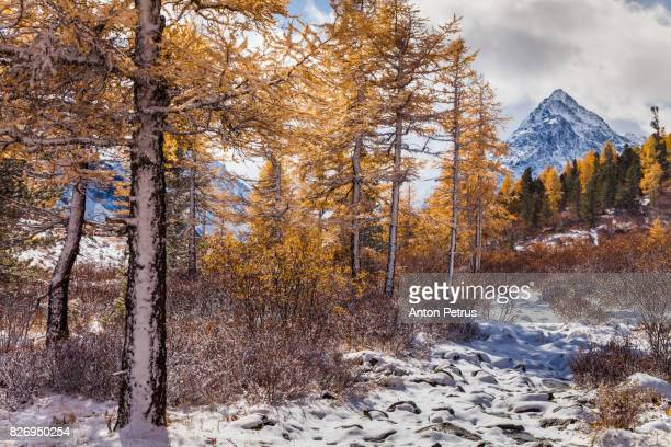 The first snow in a mountain valley in autumn