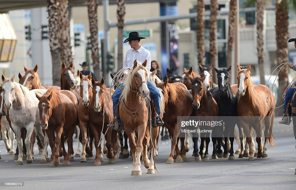 The first-ever orchestrated horse stampede shuts down the Las Vegas Strip and marks Shania Twain's arrival to The Colosseum at Caesars Palace on November 14, 2012 in Las Vegas, Nevada.