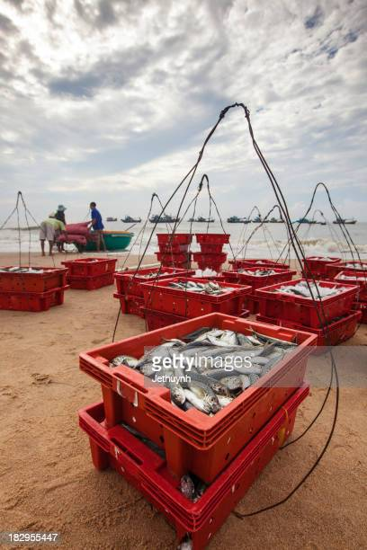 The Fishing Crates at the Beach