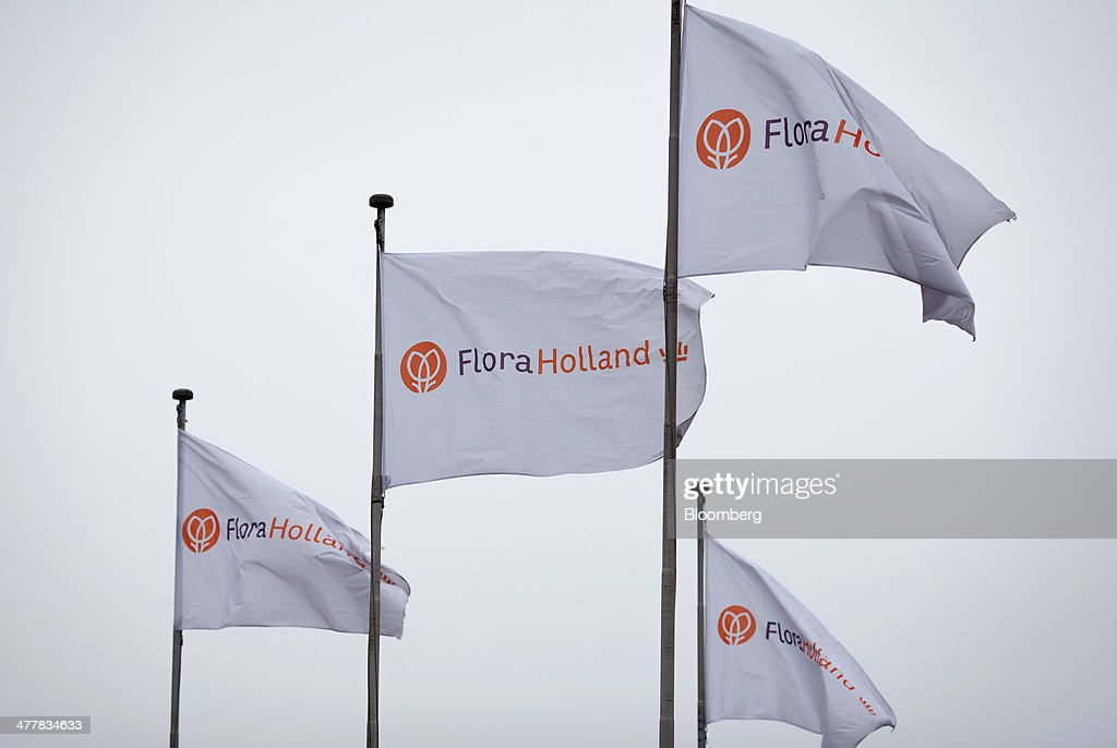 The FloraHolland logo sits on flags flying outside the largest flower auction in the world, in Aalsmeer, Netherlands, on Tuesday, March 11, 2014. The Netherlands' flower and plant exports, the world's biggest, fell 2.3 percent last year as declining consumer purchasing power was compounded by cold spring weather in Europe and a summer heat wave that hurt sales. Photographer: Jasper Juinen/Bloomberg via Getty Images