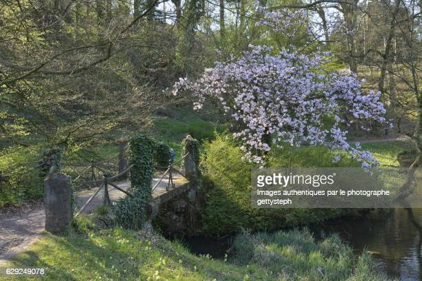 The flower tree near rustic footbridge