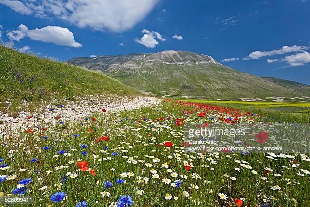 The flowering of Castelluccio di Norcia