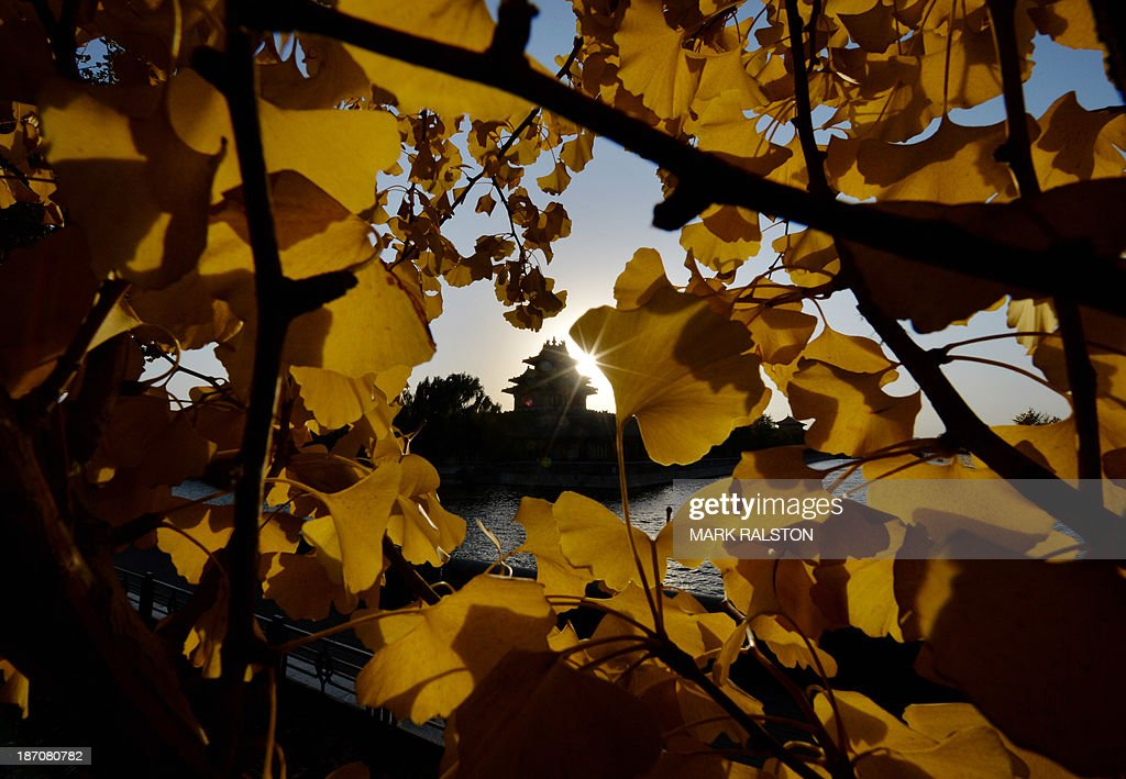 The Forbidden City (C) is seen through autumn leaves on a tree during sunset in Beijing on November 6, 2013. Autumn typically lasts from September to October in Beijing before the winter months when temperatures often fall below zero. AFP PHOTO/Mark RALSTON