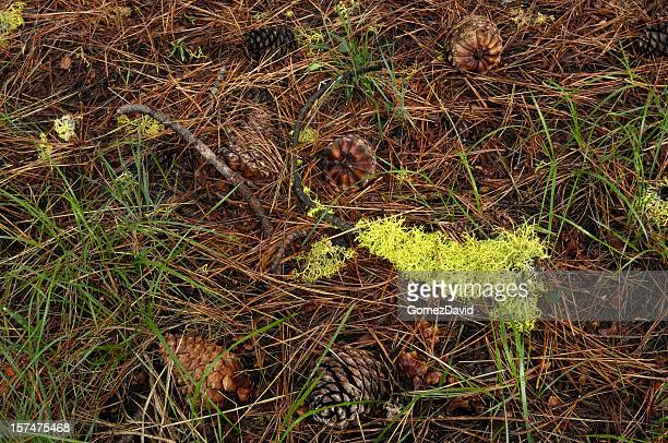 The forest ground with moss, sticks, and pine cones.