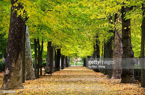 The forests in Aranjuez,Madrid